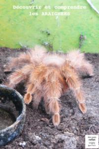ressources sur les araignées