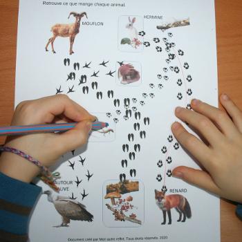 Que mange les animaux de la montagne ?