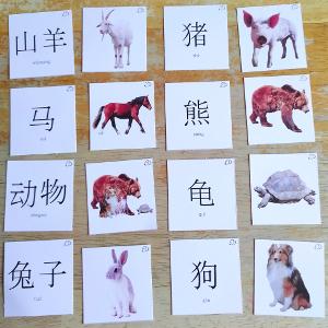vocabulaire en chinois mandarin les animaux